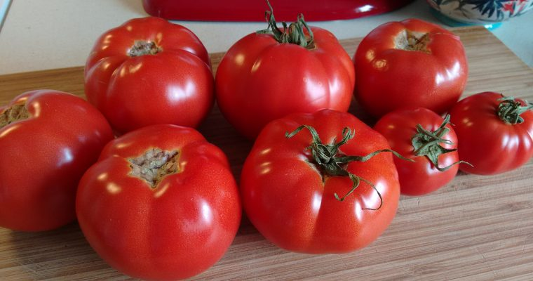 Learning to grow tomatoes in cold climate.